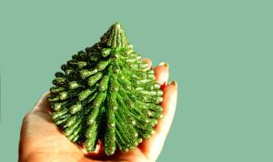 christmas-tree-1444041