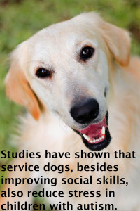 dogs reduce stress 5.11.15